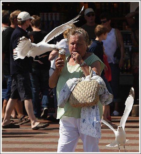 Seagulls 11 Ice cream thieves!