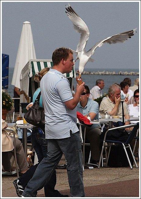 Seagulls 2 Ice cream thieves!