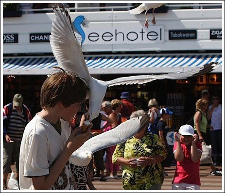 Seagulls 3 Ice cream thieves!