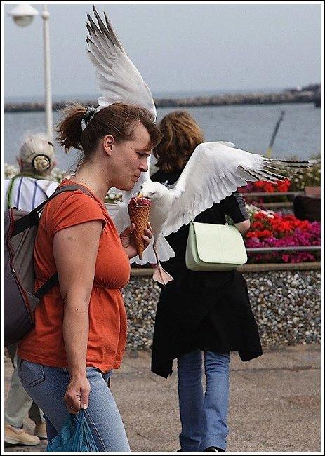 Seagulls 4 Ice cream thieves!