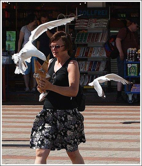 Seagulls 5 Ice cream thieves!