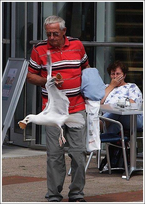 Seagulls 6 Ice cream thieves!