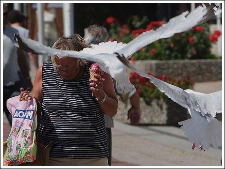 Seagulls 7 Ice cream thieves!