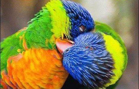 animal-kisses-1