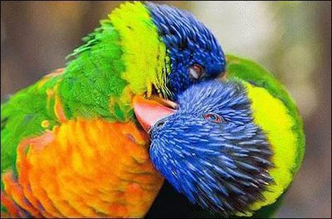 Wild Animal kiss animals zone Animals Pictures  How Animals Kiss