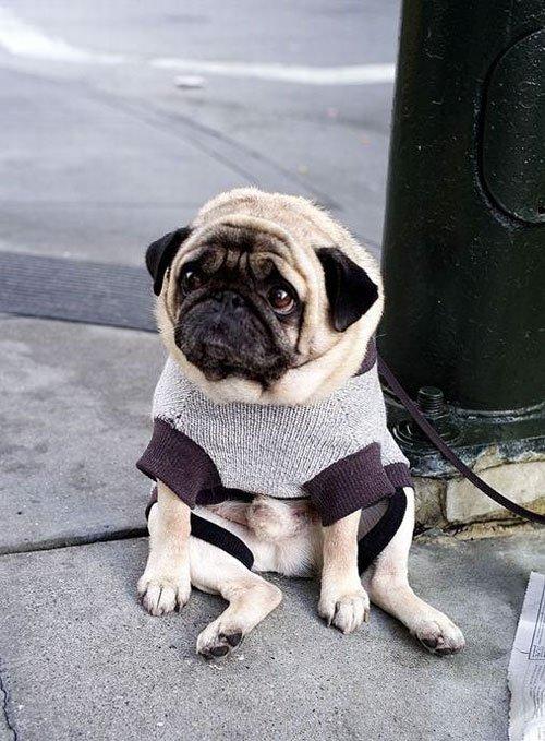 brains feelings sadness dog drowned owner ignoring