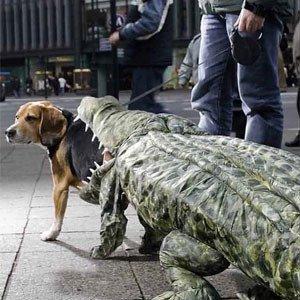 dog-croc1