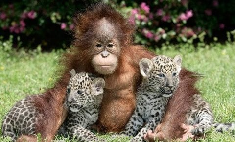 Wild Animal celebrities baby animals zone Animals Pictures animal  Cute Baby Animals