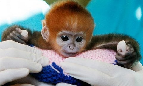 Baby Animals 19 Cute Baby Animals