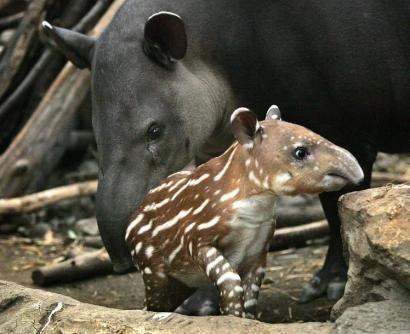 Baby Animals 32 Cute Baby Animals