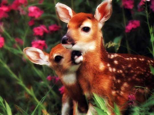 Baby Animals 41 Cute Baby Animals
