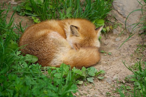 Wild Animal animals zone Animals Pictures  Sleeping animals