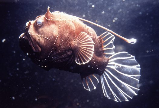 7 Unusual Deep Sea Creatures Animals Zone