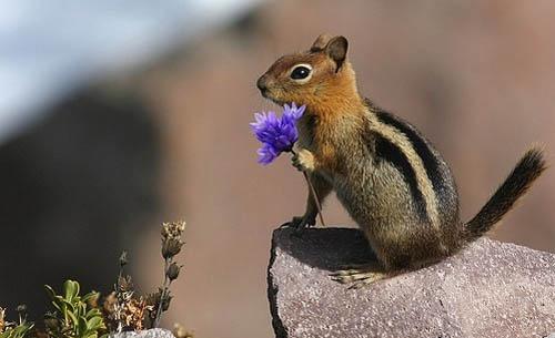 Animals flowers 4 Animals love flowers