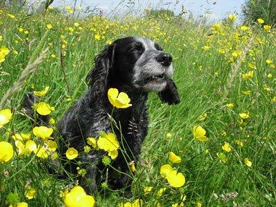 Animals flowers 6 Animals love flowers