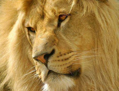 Amazing Big Cats Animals Zone