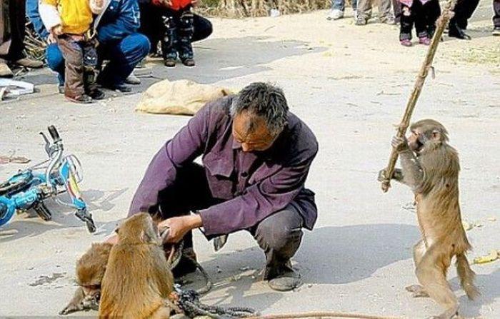 animals attack 1 Animals Attack