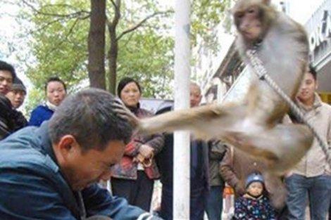 animals attack 18 Animals Attack