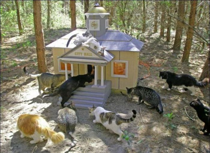 cat city 12 Luxurious place for cats