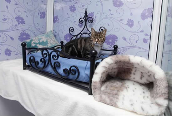 cat hotel 8 Unusual Luxury Cat Hotel
