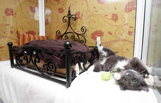 cat hotel 9 Unusual Luxury Cat Hotel