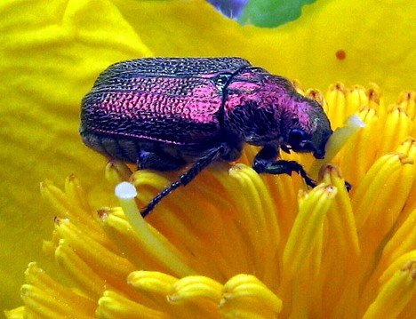 Purple Beetles 2 10 Amazing Purple Animals