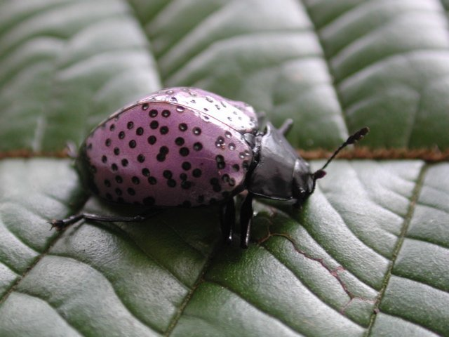 Purple Beetles 3 10 Amazing Purple Animals