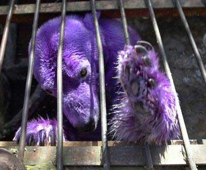 Purple Polar Bear 1 10 Amazing Purple Animals