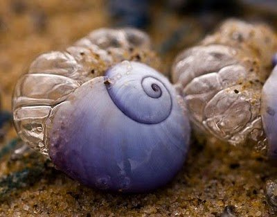 Violet Sea Snails 1 10 Amazing Purple Animals