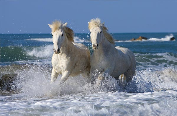 horses Lovely Animal Couples
