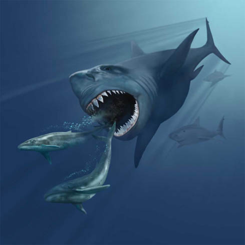 megalodon 1 Forgotten Monsters