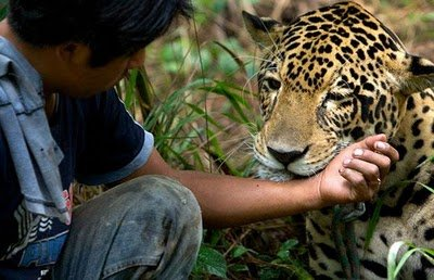 Beast As Pet Animals Zone