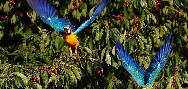 playful-parrots-3
