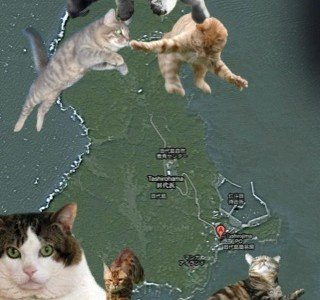 cat-island-1