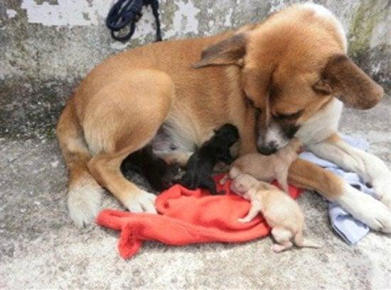 instant dog mom 5 Instant Dog Mom