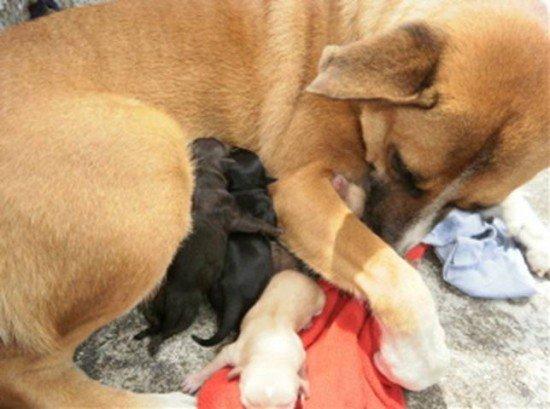 instant dog mom 6 Instant Dog Mom