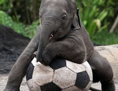 Animals-Play-football-1