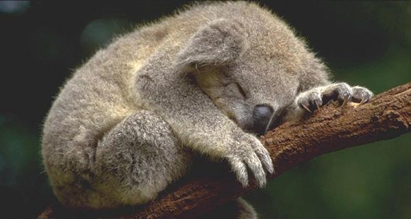 Životinje i spavanje - Page 7 Sleepiest-Animals-5
