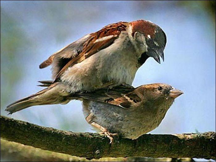 Animals practicing love 1 Animals Practicing Love