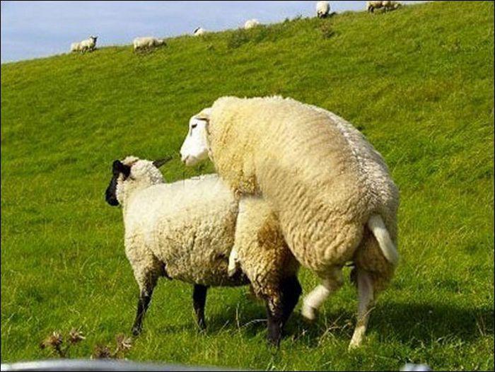 Animals practicing love 10 Animals Practicing Love