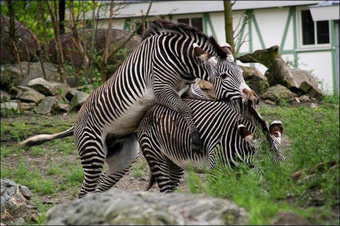 Animals practicing love 11 Animals Practicing Love