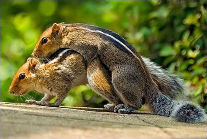 Animals practicing love 12 Animals Practicing Love