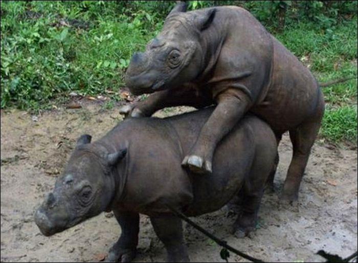 Animals practicing love 17 Animals Practicing Love