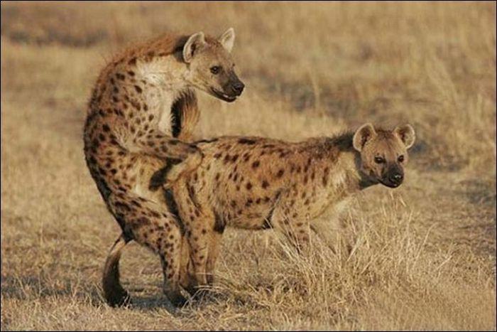 Animals practicing love 19 Animals Practicing Love
