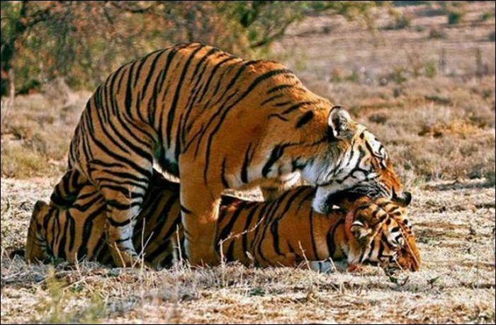Animals practicing love 5 Animals Practicing Love