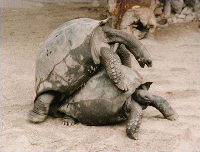 Animals practicing love 6 Animals Practicing Love
