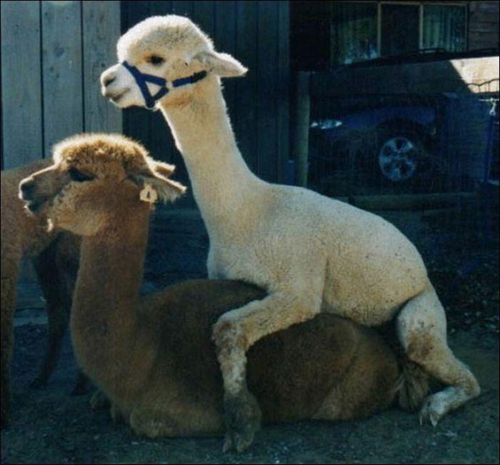 Animals practicing love 7 Animals Practicing Love