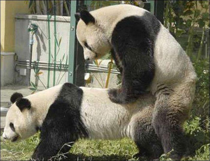 Animals practicing love 8 Animals Practicing Love
