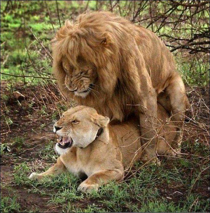 Animals practicing love 9 Animals Practicing Love