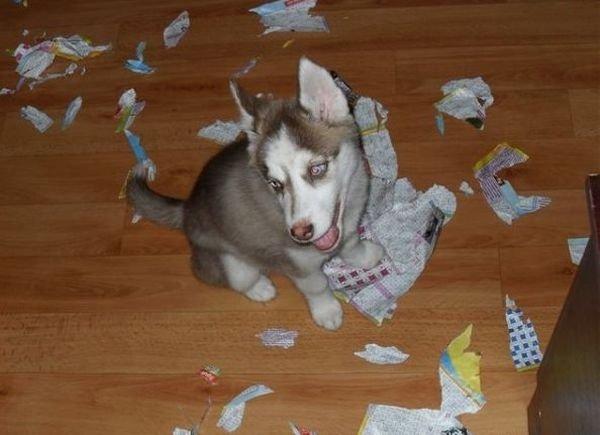 Husky Frases: Problems With Husky
